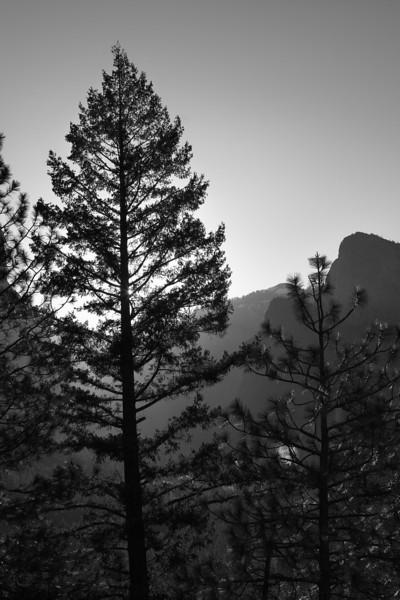 Yosemite Evergreen BW