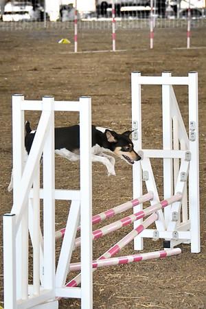 Agility Friday 9/6/19 Chowchilla Fairgrounds