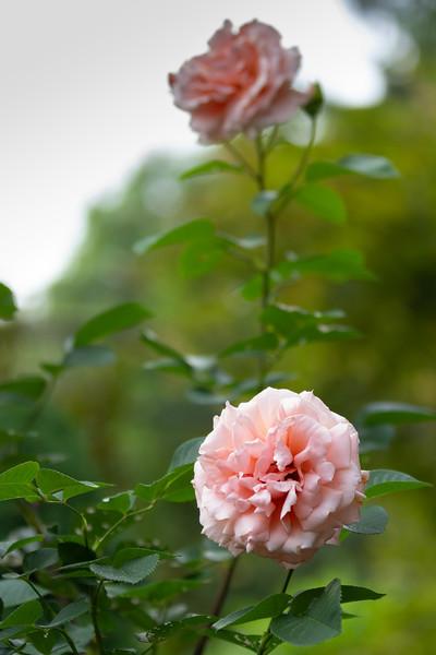 20180531_Garden-10.jpg