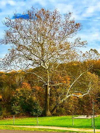 Raedlers Tree