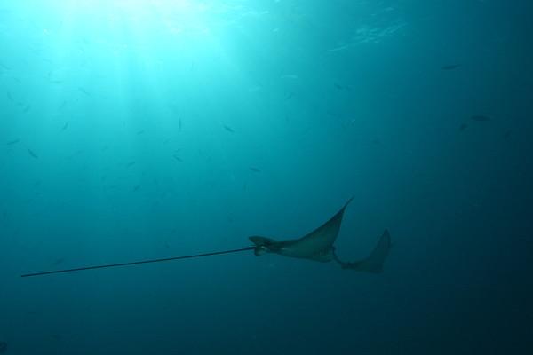 Seychelles Underwater