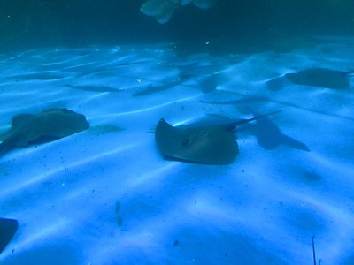 2015 - Spain - Mallorca - Palma - Aquarium