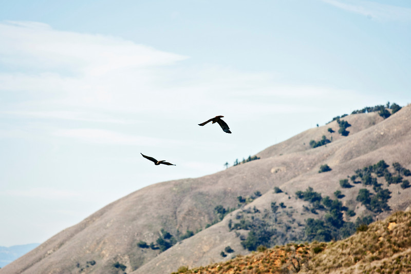 20110101_Palomar Mountain_0306.jpg