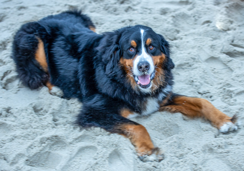 LaJolla Beach and Lloyd the dog  June 12, 2019  02_.jpg