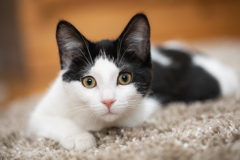 Kitten-38-Edit.jpg