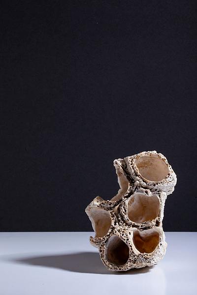 RobCasey-barnacle-2.jpg