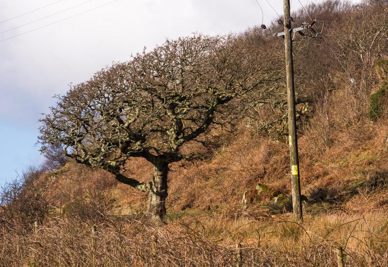 Scotland_Mar_2014-94.jpg