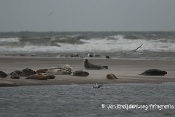 20141026 Kust op Kracht (zeehonden)