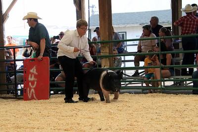 Market Swine 5