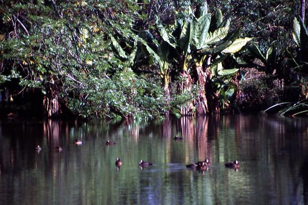 Madagascar - July & Aug. 1997