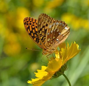 Butterflies, etc