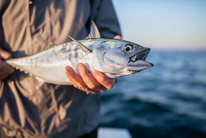capecodfalsealbacorefishing.bencarmichael (4 of 13).jpg