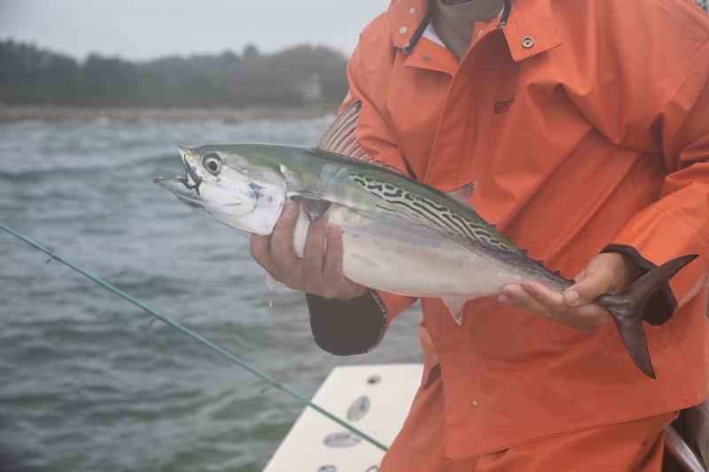 capecodfalsealbacoreflyfishing.fall18bcarmichael (3 of 44).jpg