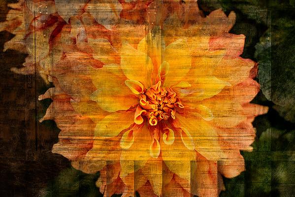 Flower Composites