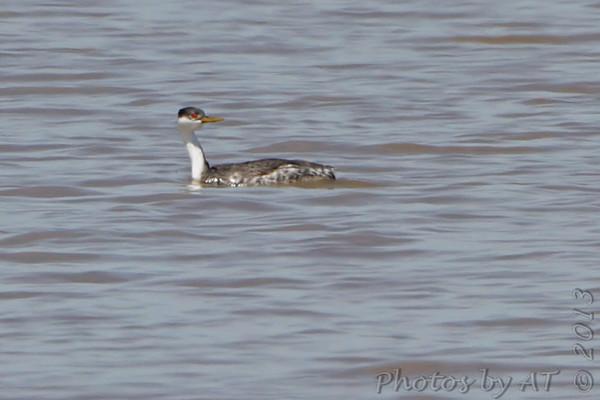 2013-04-22 Riverlands Migratory Bird Sanctuary