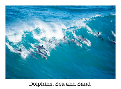 Dolphins, Sea and Sand