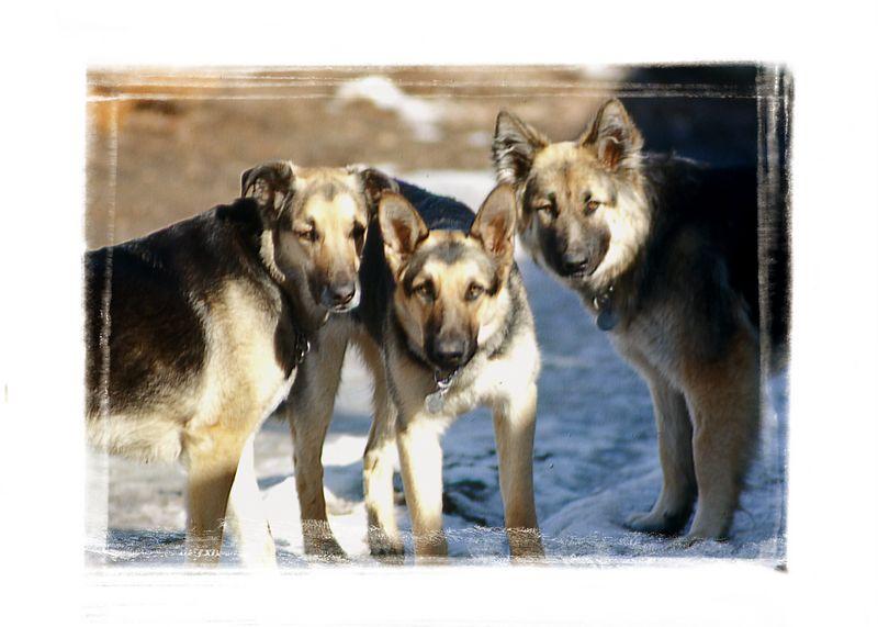 Nicki, Tasha, Princess - the 3 inseparable sisters