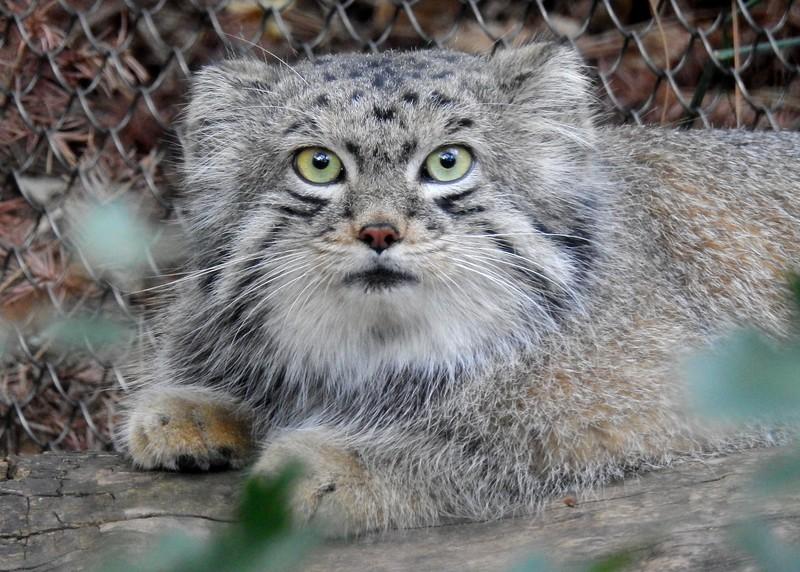 Cheyenne Mtn Zoo 2019 (1182).JPG