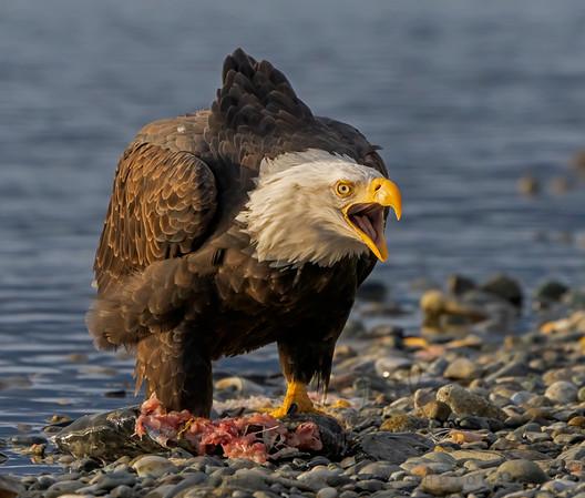 Haines, Alaska Images