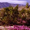 Anza Borego Desert CA