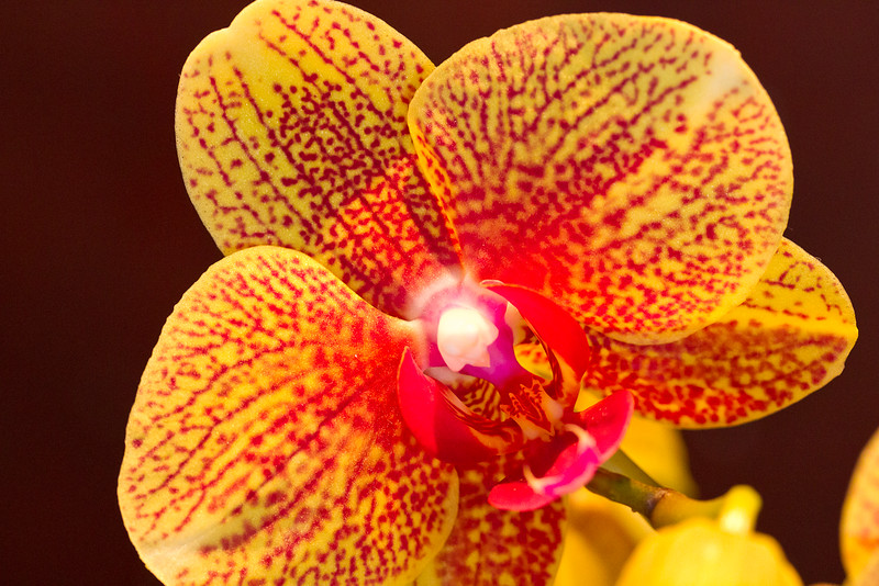 SF_Orchid_Show-32.jpg