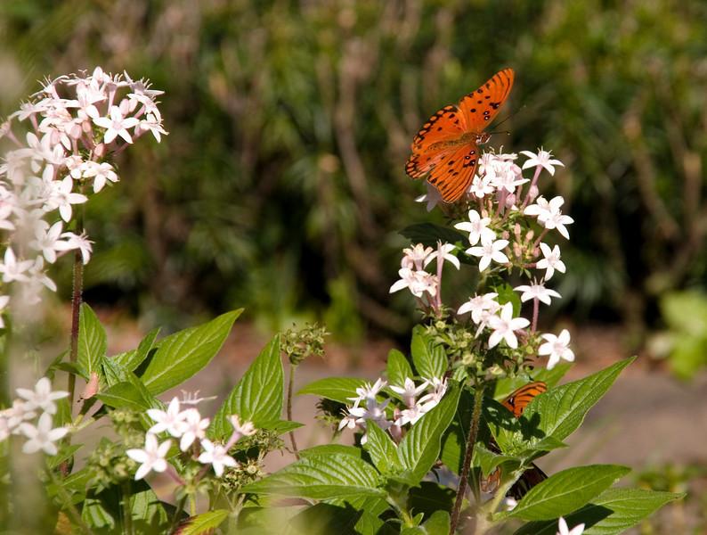 Butterflies in Charleston, SC