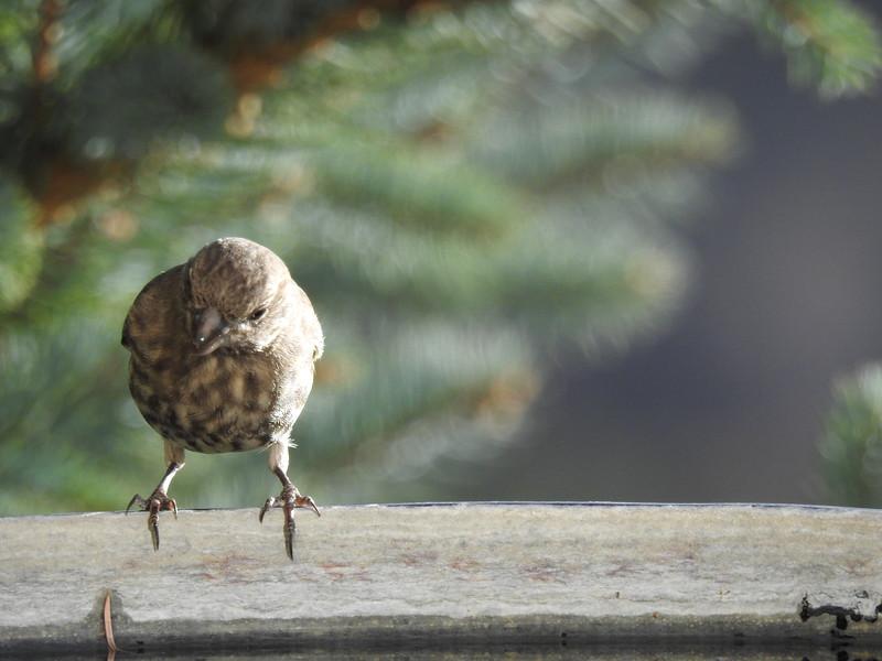 birds (110).JPG
