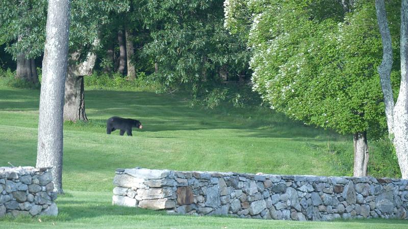 bear (1).jpg