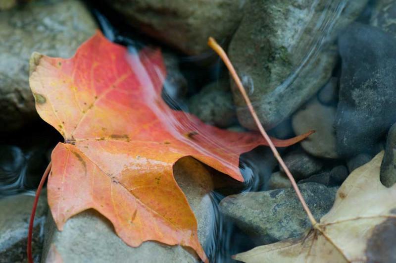 leaf-in-water.jpg
