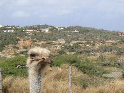 Aruba Ostrich Farm April 2005