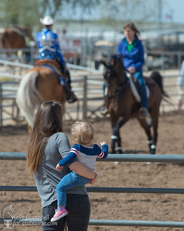Scottsdale Arabian Horse Show Arabhorse.com