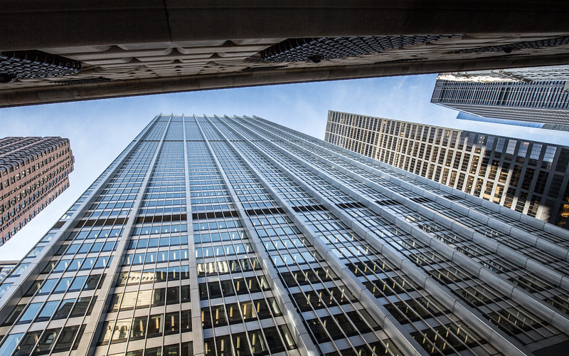 Looking Up (rotated).jpg