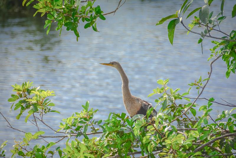 Everglades-27.jpg