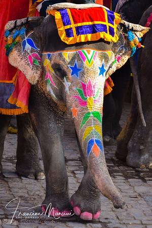 India-Animals