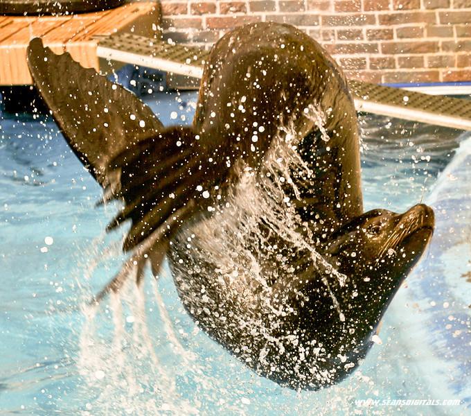 Seaworld-Zoo-10.jpg