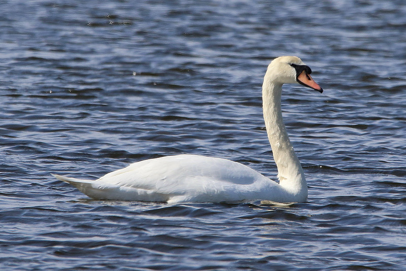 swan 2020 6_edited-1.jpg