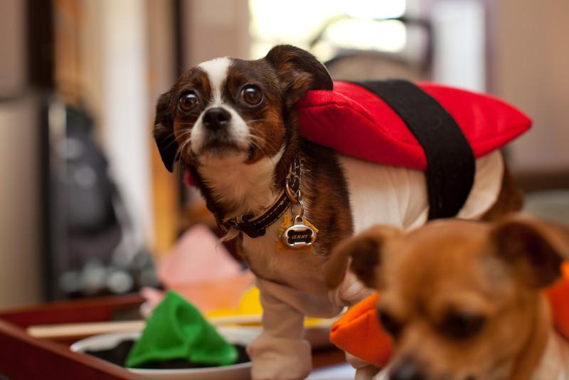 Dog-sushi-halloween2-3.jpg