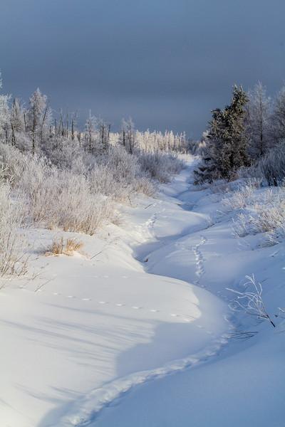 Hoar frost winter landscape CR133 Sax-Zim Bog MN  IMG_0006.jpg