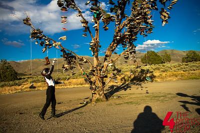 07.06.17 - The Shoe Tree