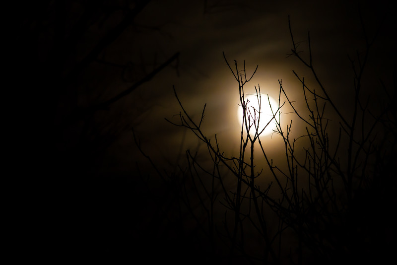 Twigs in the Super Moon Light (Color)