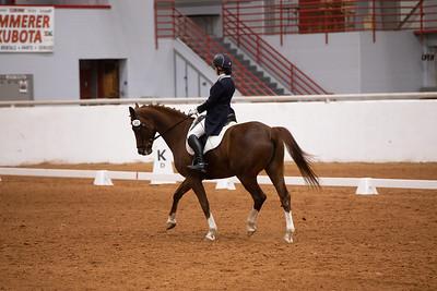 Horse 161