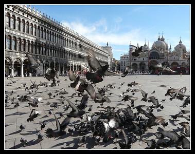 Venezia 2008 - San Marco