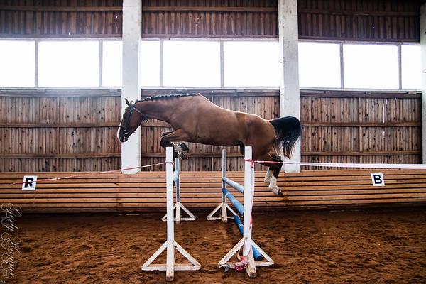 Hobuste ülevaatus @ Saksa Tallid
