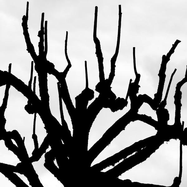 Tree silhouette 10