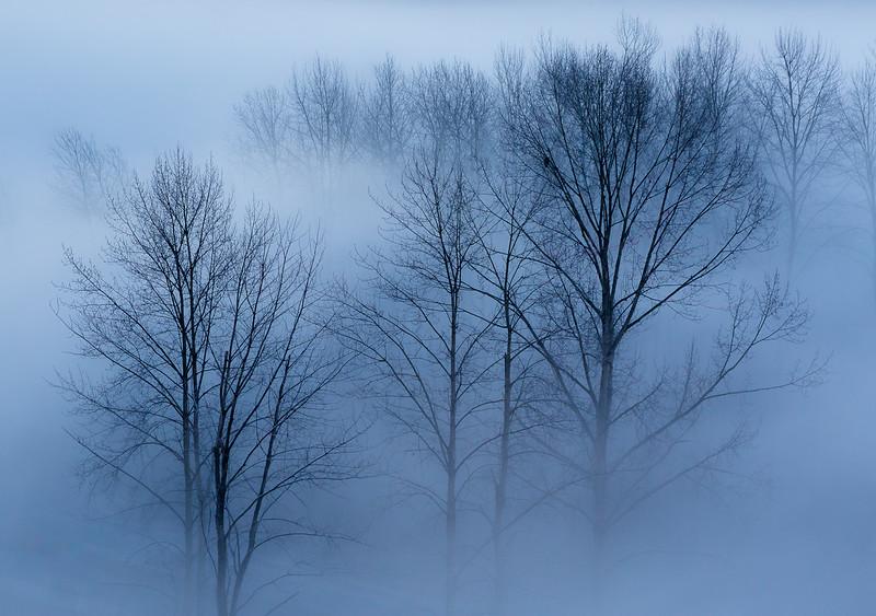 Fog under the bridge.jpg