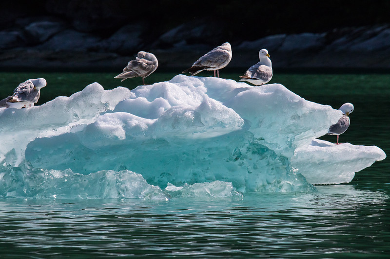 Petersberg Alaska 2019-3.jpg