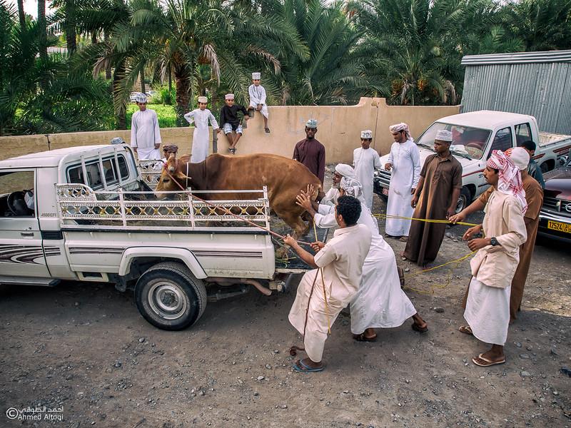 P8050357-Edit- Oman.jpg
