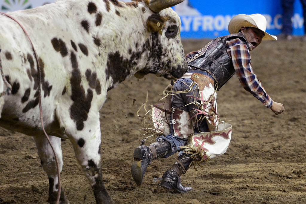 . DENVER, CO. - JANUARY 21: Andy Sells runs from his bull after getting bucked off during the bull riding performance at the National Western Stock Show Martin Luther King Heritage Rodeo January 21, 2013 (Photo By AAron Ontiveroz / The Denver Post)