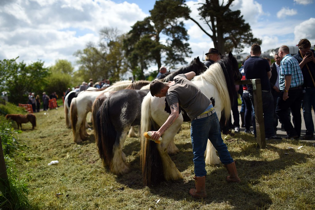 . A man grooms a horse on the opening day of the annual Appleby Horse Fair, in the town of Appleby-in-Westmorland, North West England on June 4, 2015. The annual event attracts thousands of travelers from across Britain to gather and buy and sell horses. AFP PHOTO / OLI SCARFF/AFP/Getty Images