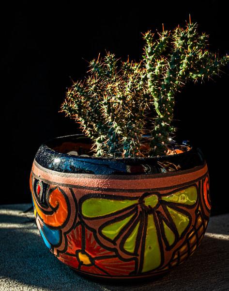 Cactus 091519-0193.jpg